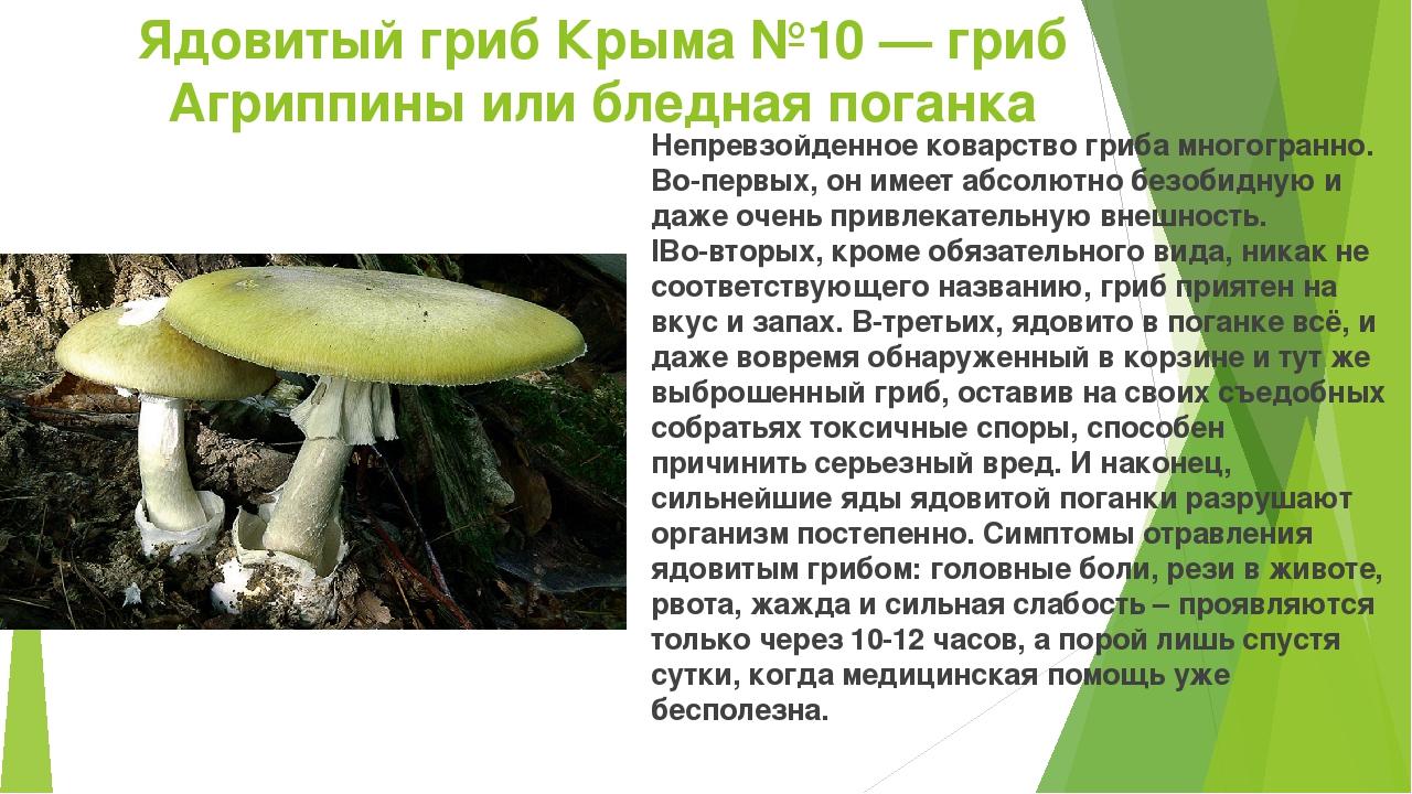 ядовитые грибы фото и описание кратко может использоваться только