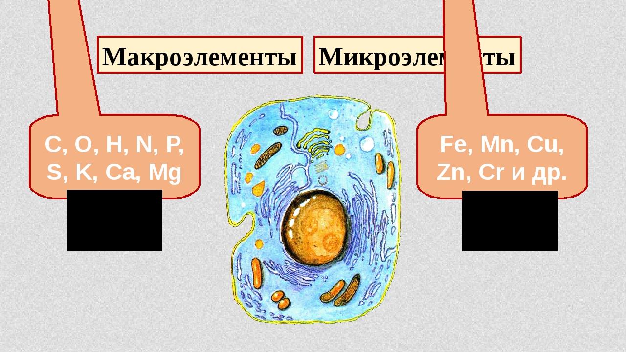 Макроэлементы Микроэлементы C, O, H, N, P, S, K, Ca, Mg 99,9% в клетке Fe, Mn...
