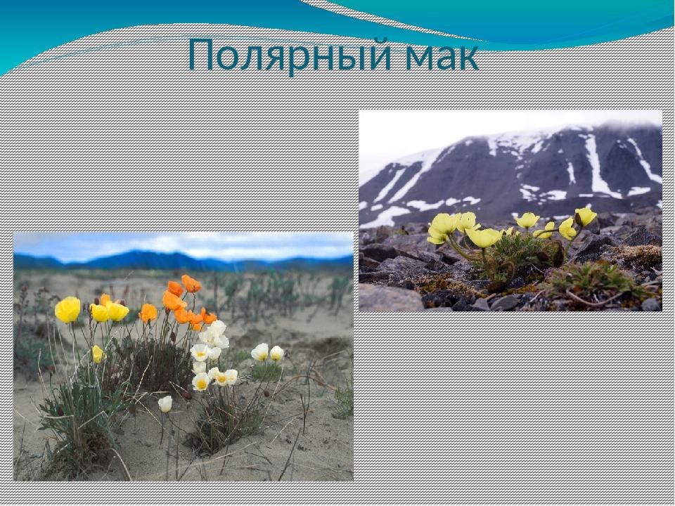 девушки растения арктики картинки с названиями опять