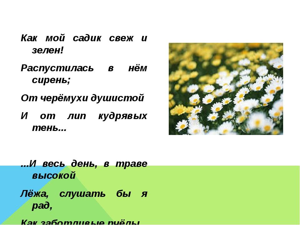 Как мой садик свеж и зелен! Распустилась в нём сирень; От черёмухи душистой И...