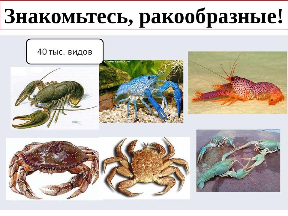 Ракообразные представители фото с названиями