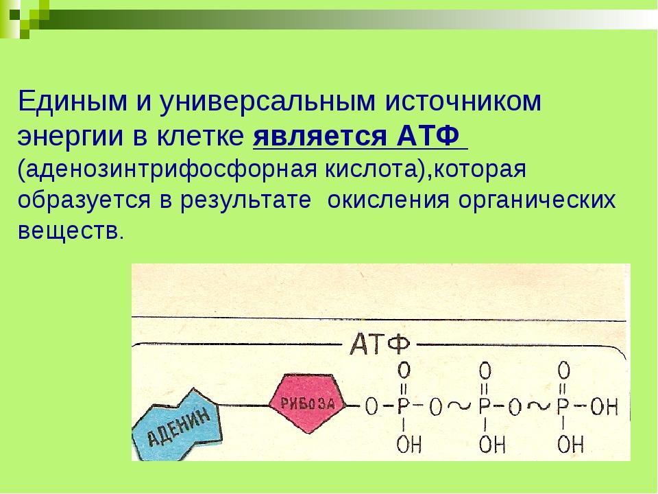 Единым и универсальным источником энергии в клетке является АТФ (аденозинтри...