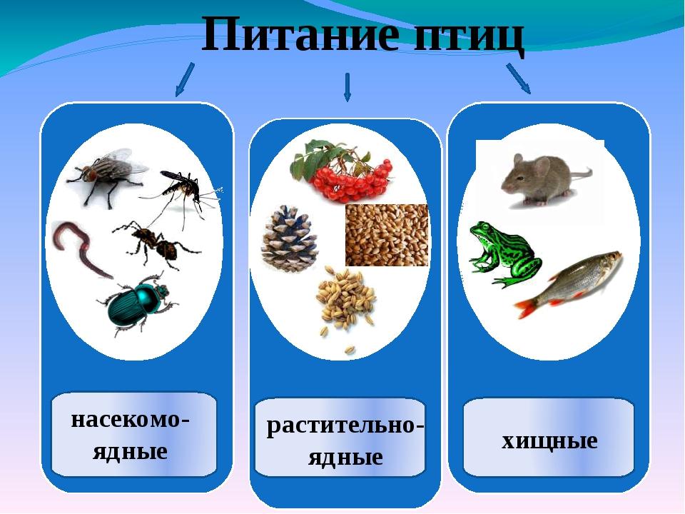 Питание птиц насекомо- ядные растительно- ядные хищные