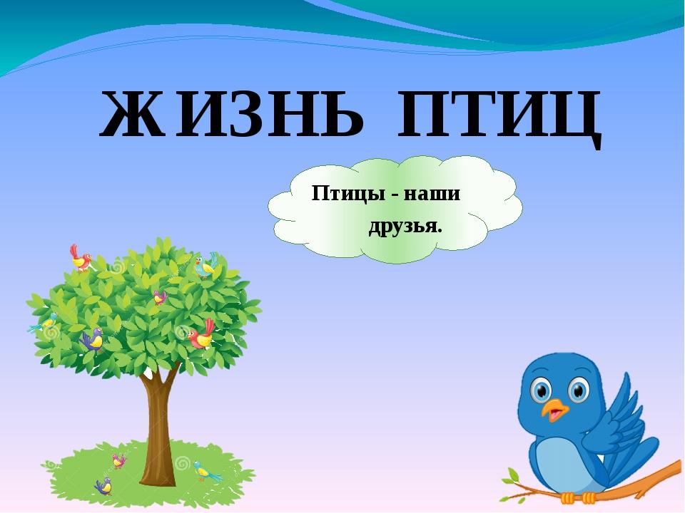 ЖИЗНЬ ПТИЦ Птицы - наши друзья.