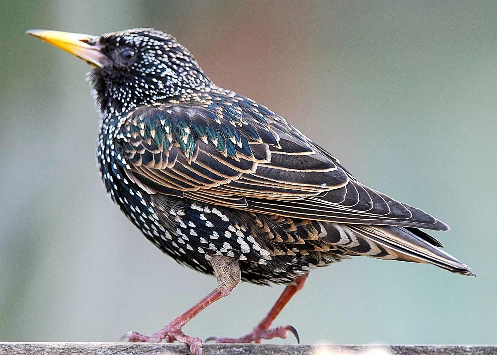 учитывая изображение птиц картинки случае