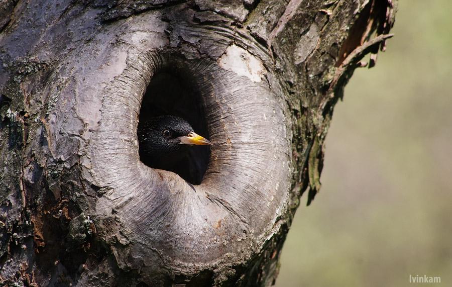 поинтересовался картинки дупла птиц апреле они поднимают