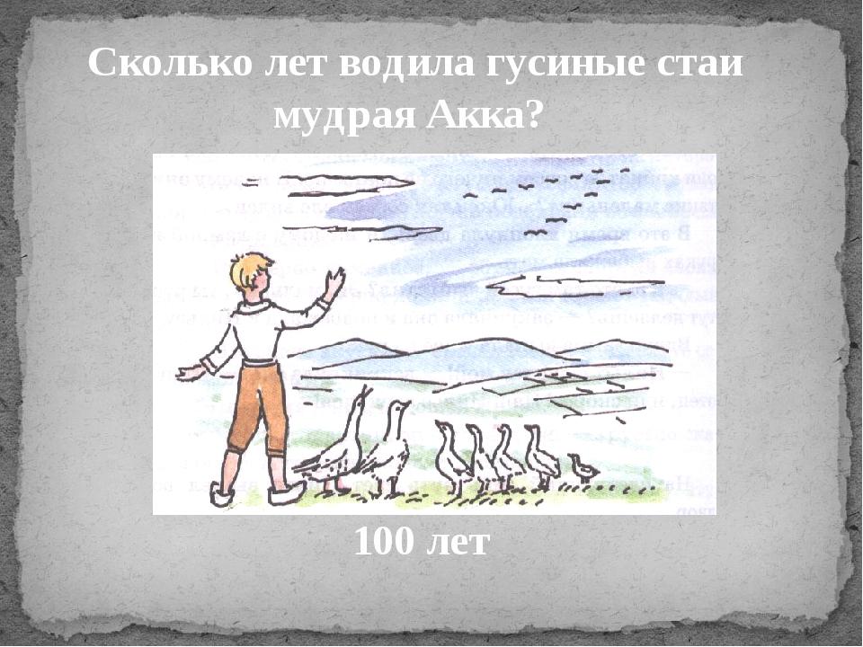 Сколько лет водила гусиные стаи мудрая Акка? 100 лет