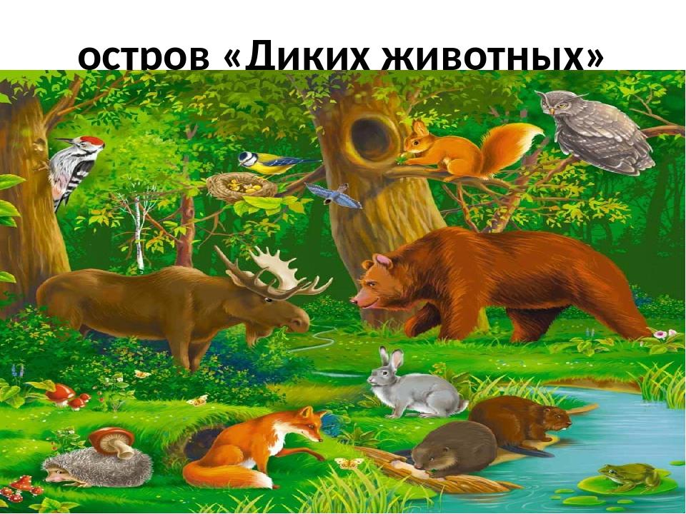 остров «Диких животных»