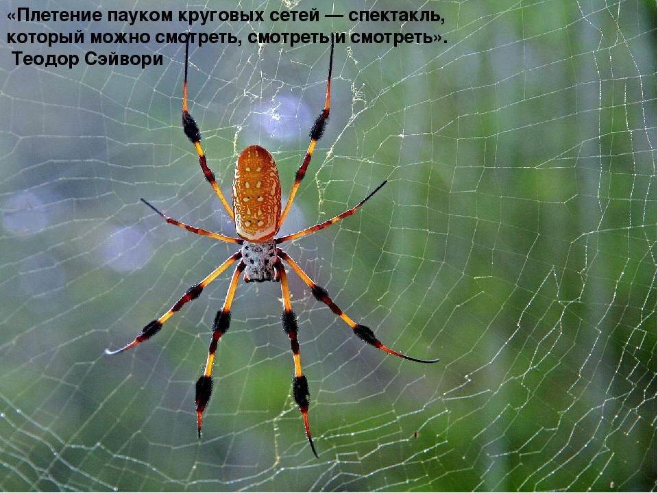 «Плетение пауком круговых сетей — спектакль, который можно смотреть, смотрет...
