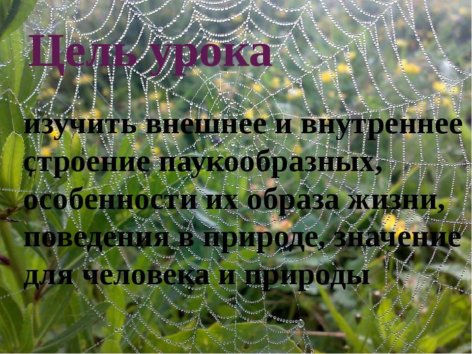 Цель урока изучить внешнее и внутреннее строение паукообразных, особенности и...