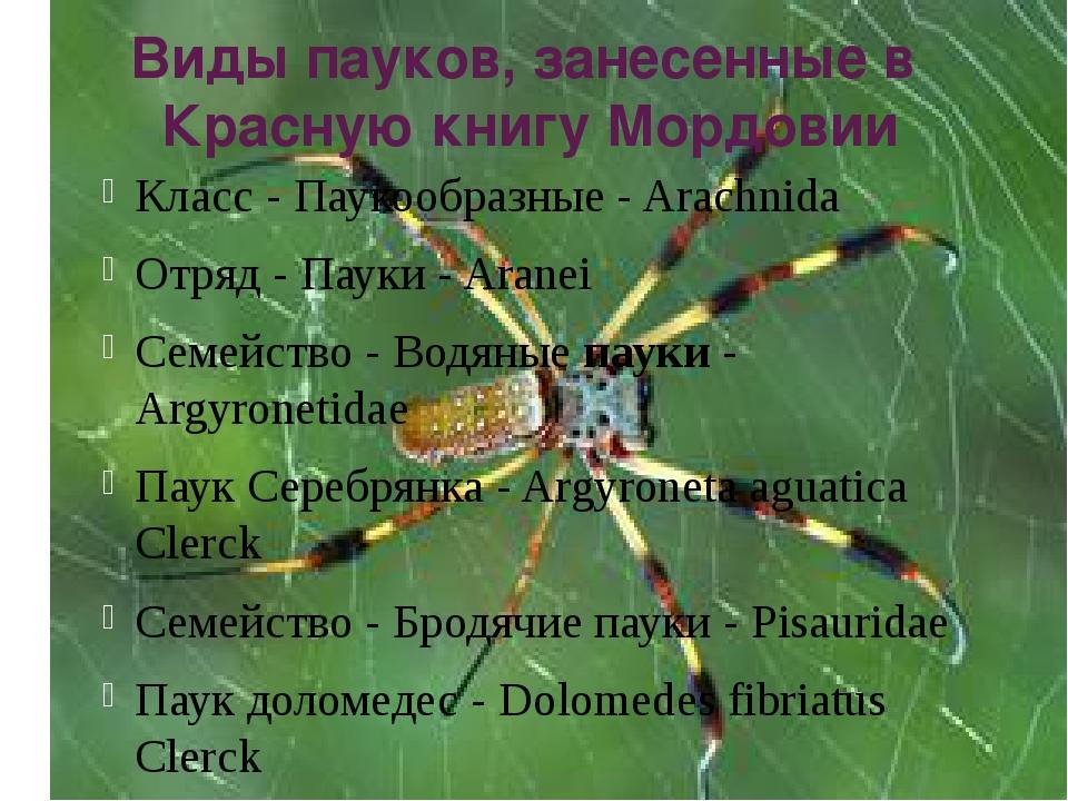 Виды пауков, занесенные в Красную книгу Мордовии Класс - Паукообразные - Arac...