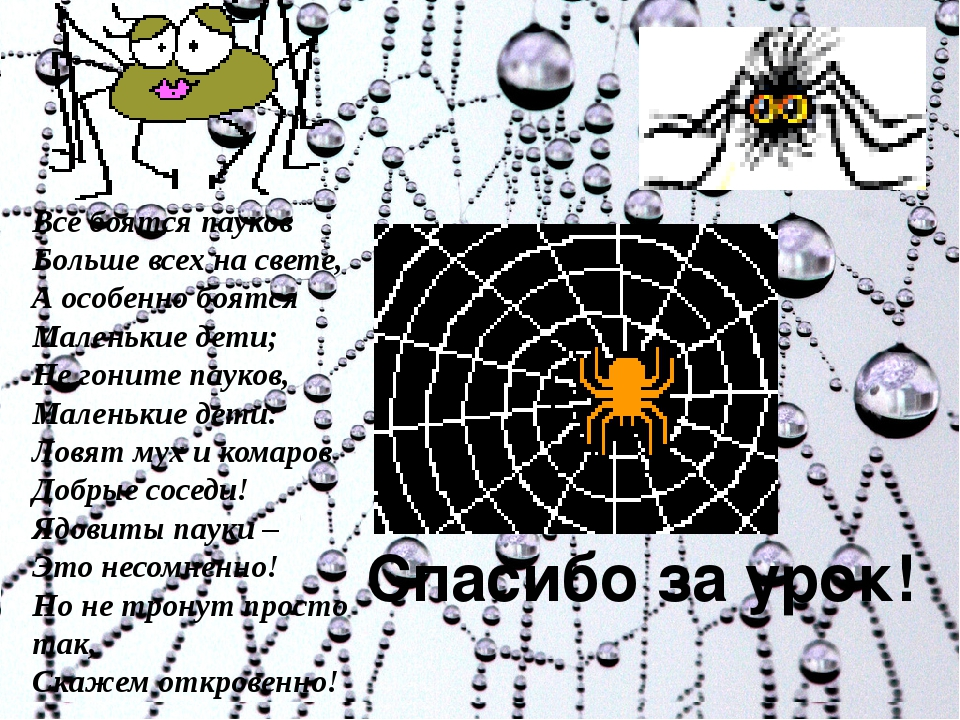 Спасибо за урок! Все боятся пауков Больше всех на свете, А особенно боятся М...