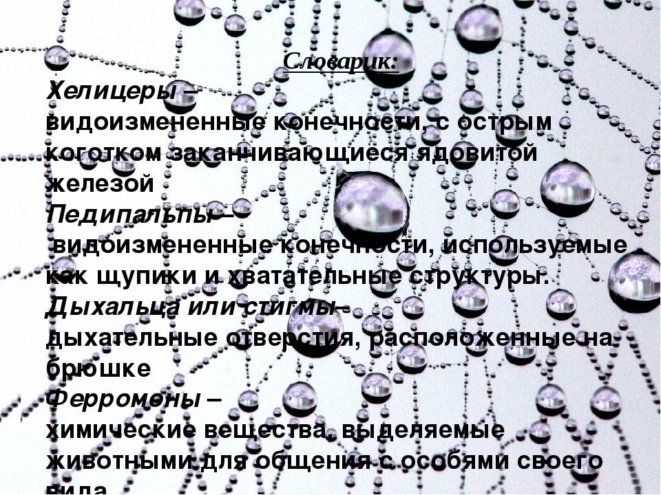 Словарик: Хелицеры – видоизмененные конечности, с острым коготком заканчиваю...
