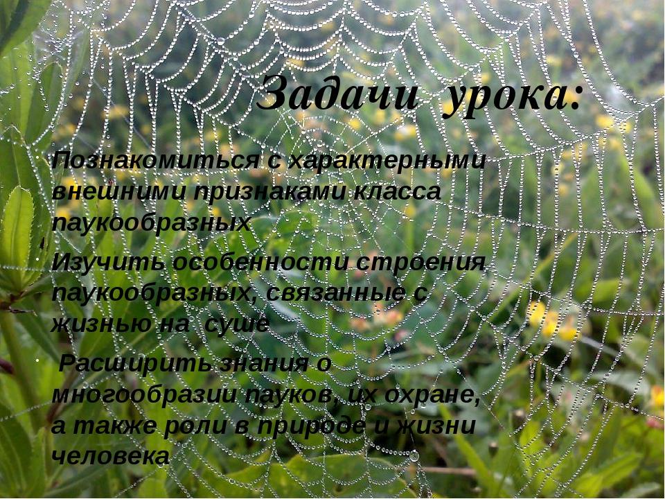 Задачи урока: Познакомиться с характерными внешними признаками класса паукоо...