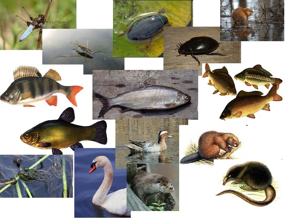 Животный мир водоемов картинки