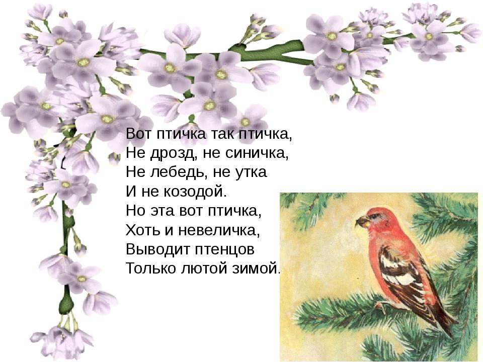 Вот птичка так птичка, Не дрозд, не синичка, Не лебедь, не утка И не козодой...