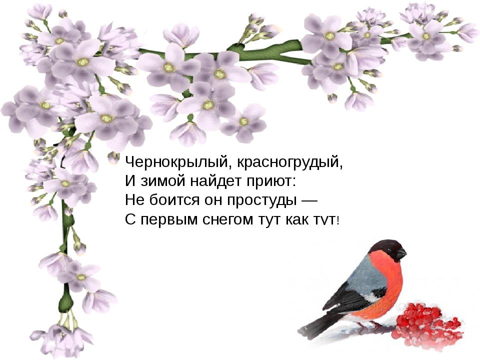 Чернокрылый, красногрудый, И зимой найдет приют: Не боится он простуды — С п...
