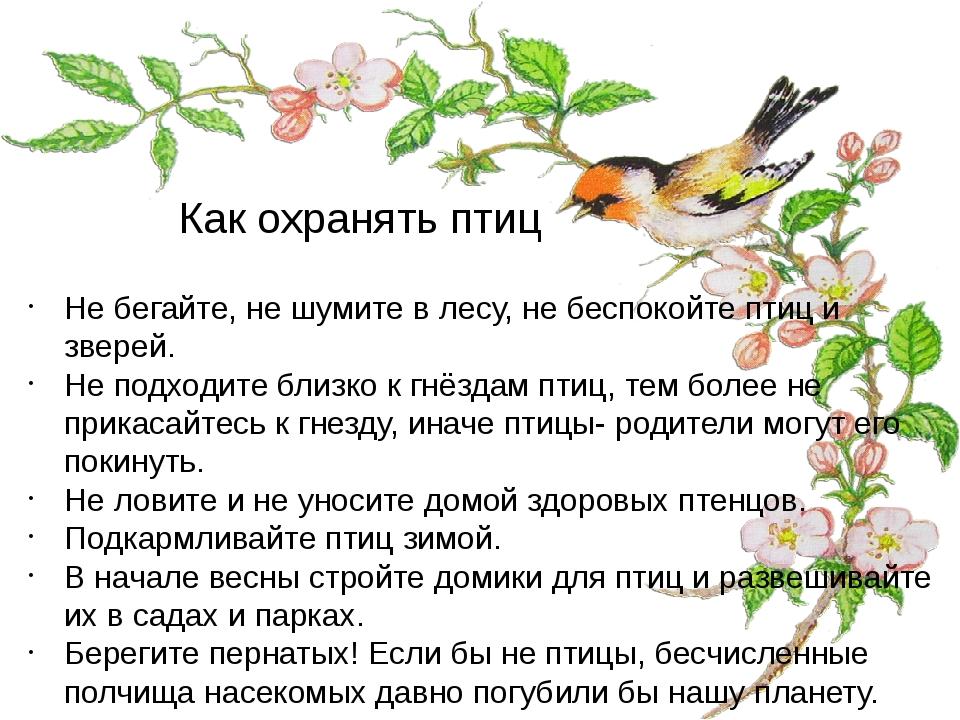 Как охранять птиц Не бегайте, не шумите в лесу, не беспокойте птиц и зверей....