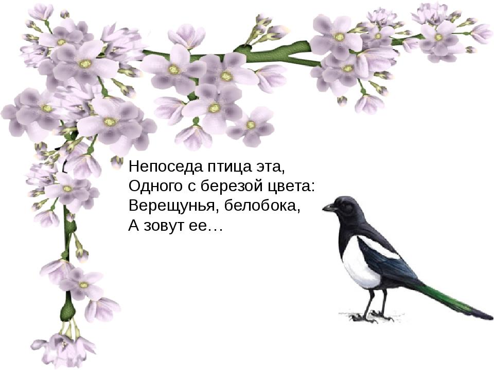 Непоседа птица эта, Одного с березой цвета: Верещунья, белобока, А зовут ее…