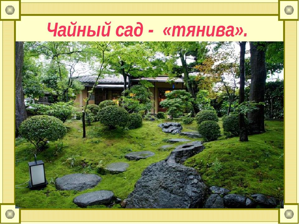 Чайный сад - «тянива».