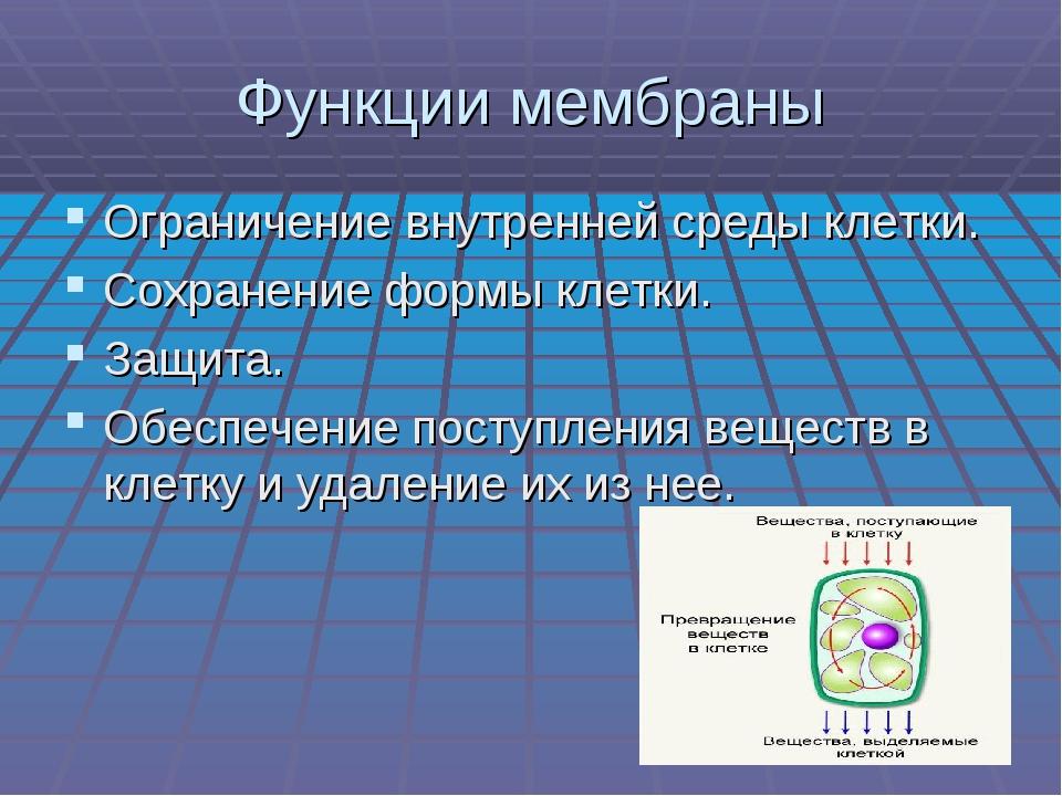 Функции мембраны Ограничение внутренней среды клетки. Сохранение формы клетки...