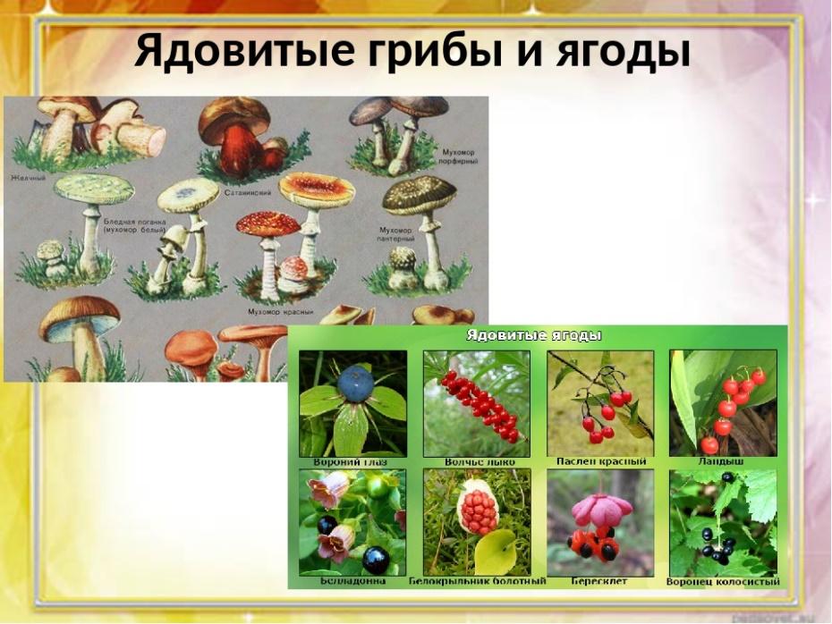 выбором ядовитые грибы и ягоды фото и описание данном макете