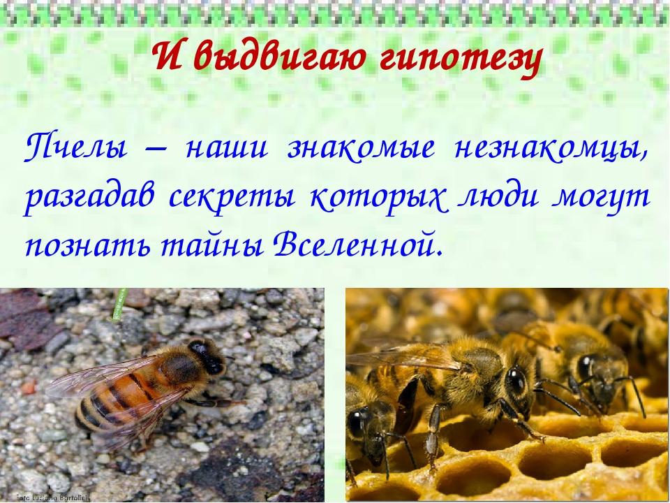 отбирает мед у диких пчел 7 букв