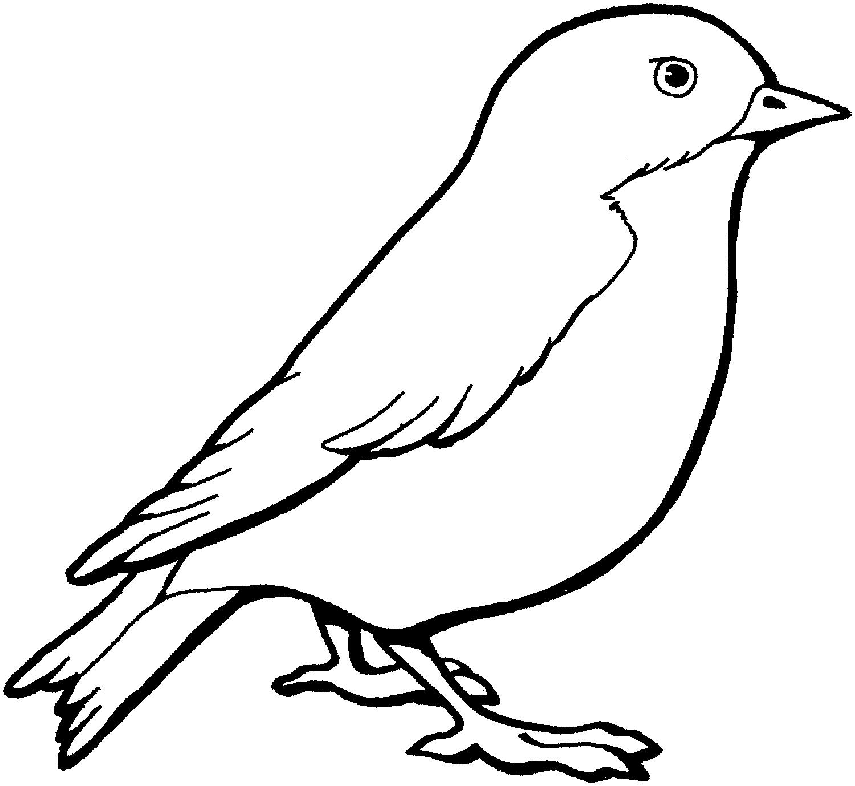 Картинки птички не цветные