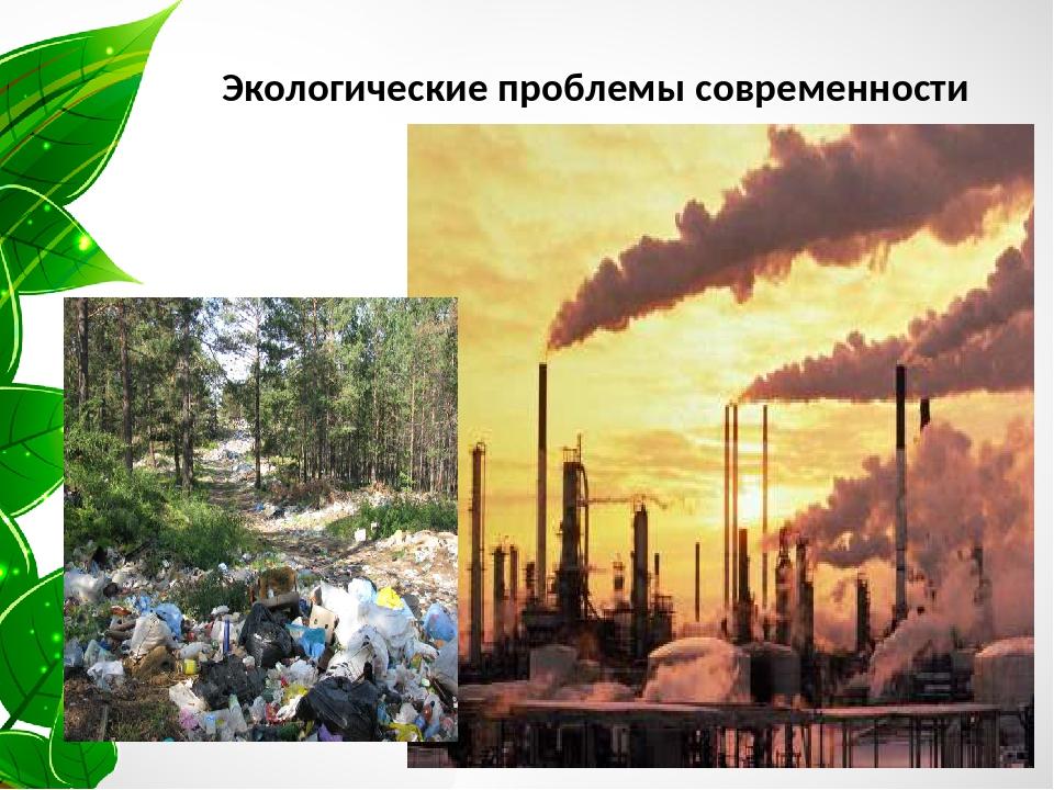 цветок фото реферат экологические проблемы странице