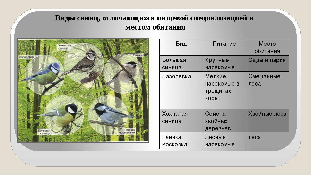 Виды синиц, отличающихся пищевой специализацией и местом обитания Вид Питание...