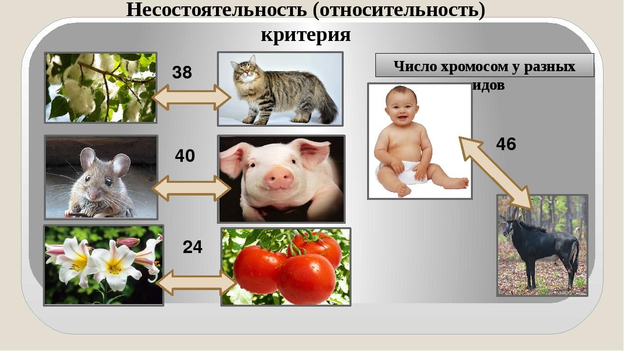 Число хромосом у разных видов 38 40 24 46 Несостоятельность (относительность)...