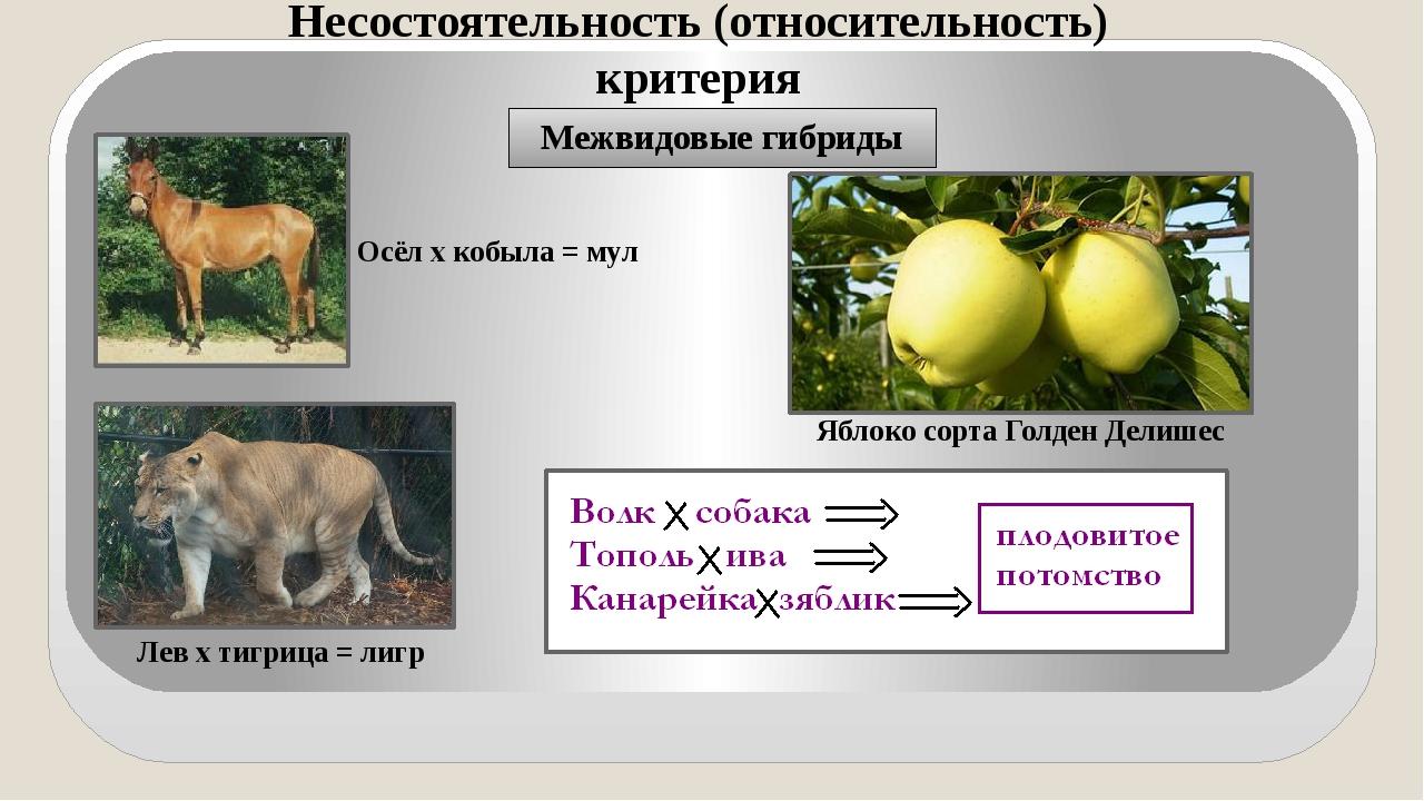 Межвидовые гибриды Осёл х кобыла = мул Лев х тигрица = лигр Яблоко сорта Голд...