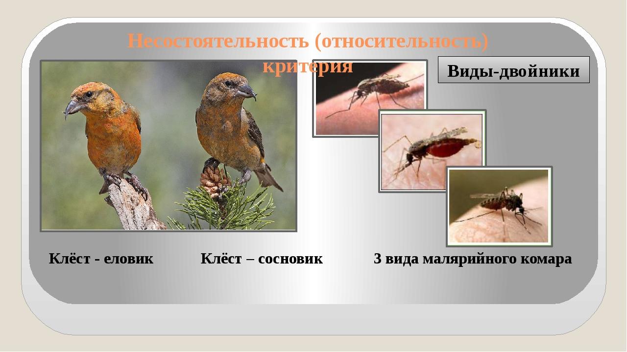 Виды-двойники Клёст - еловик Клёст – сосновик 3 вида малярийного комара Несос...