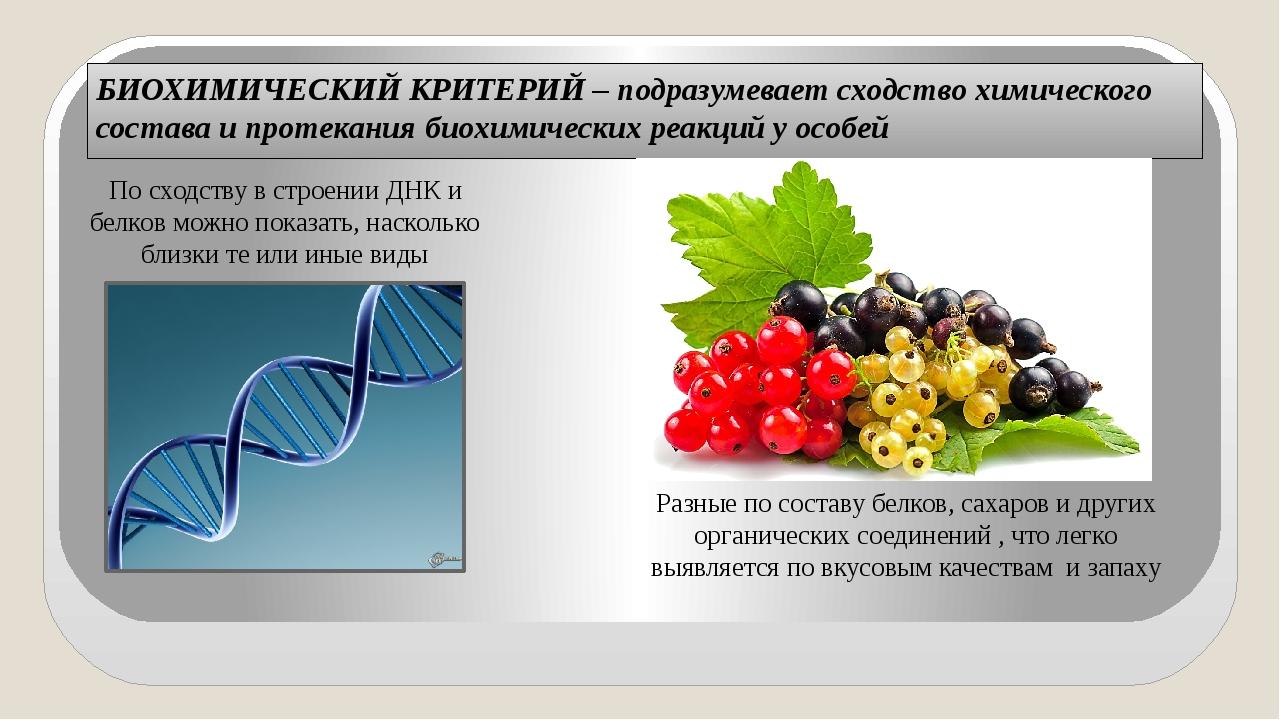 БИОХИМИЧЕСКИЙ КРИТЕРИЙ – подразумевает сходство химического состава и протека...