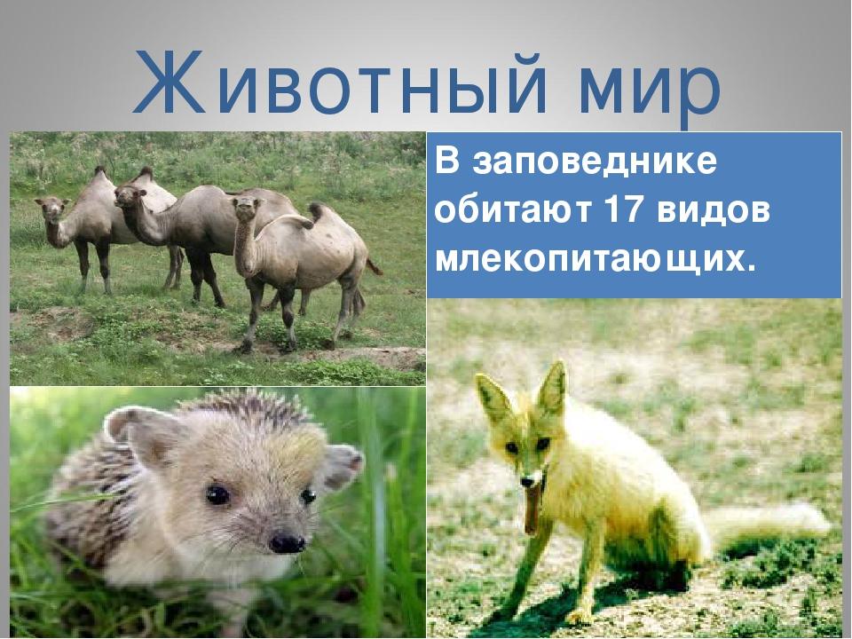 Животный мир В заповеднике обитают 17 видов млекопитающих.