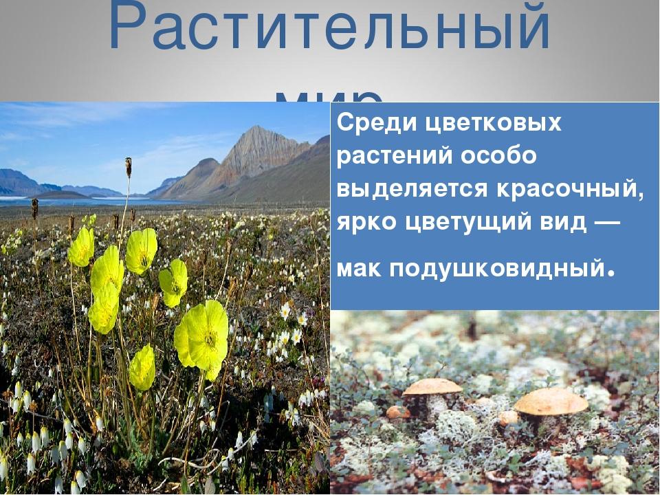 Растительный мир Среди цветковых растений особо выделяется красочный, ярко ц...