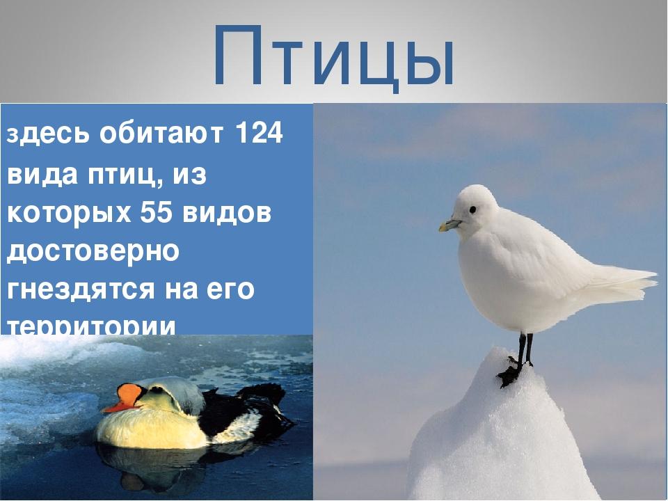 Птицы здесь обитают 124 вида птиц, из которых 55 видов достоверно гнездятся н...
