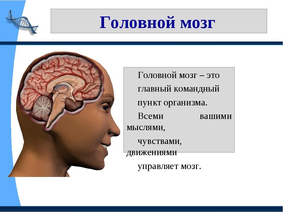 Головной мозг Головной мозг – это главный командный пункт организма. Всеми в...