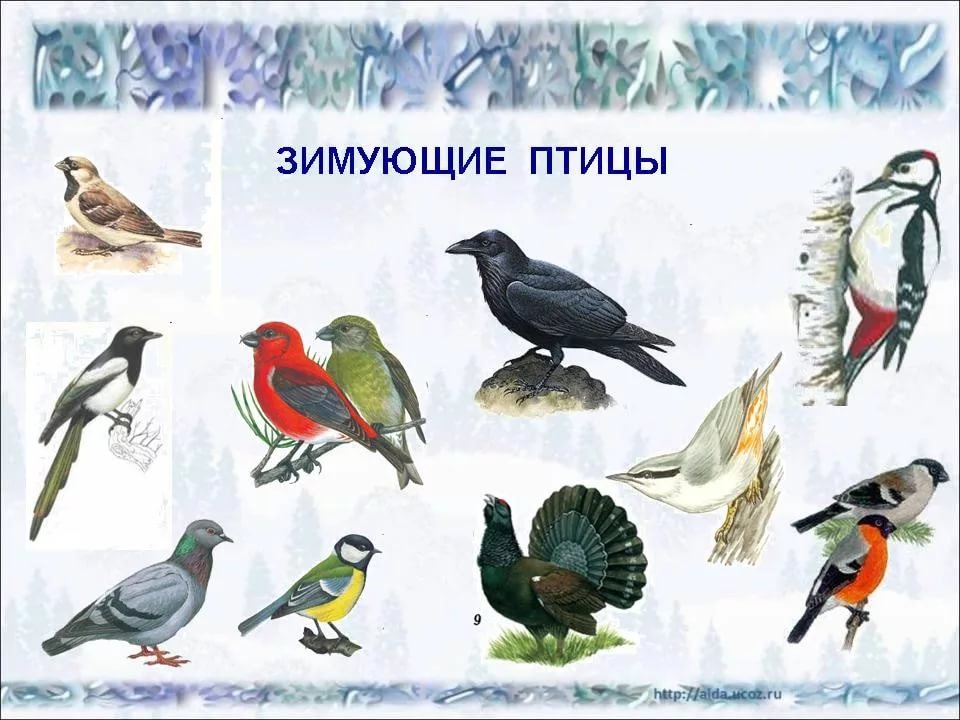 Зимующие птицы картинки с названиями птиц для детей