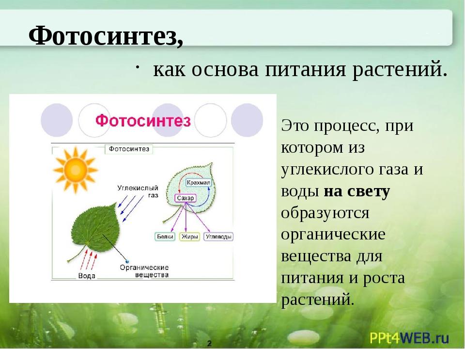 тем фотосинтез как тип питания слово языка