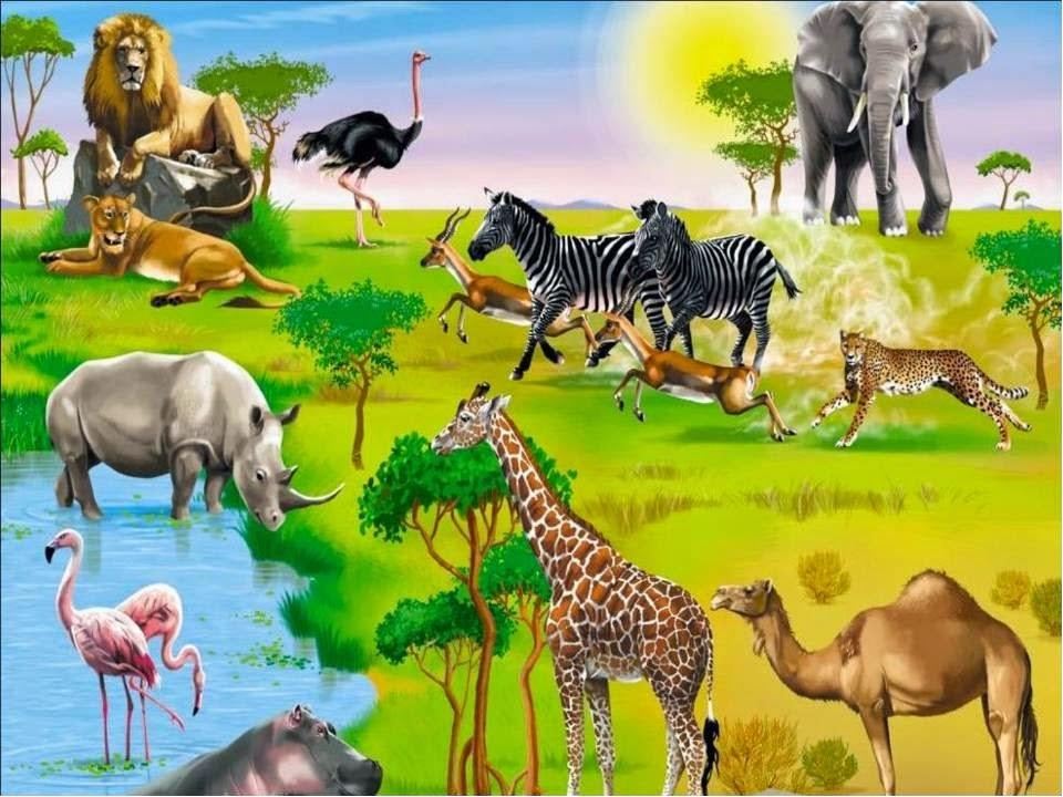 сюжетная картинка животные жарких стран можно реализовать