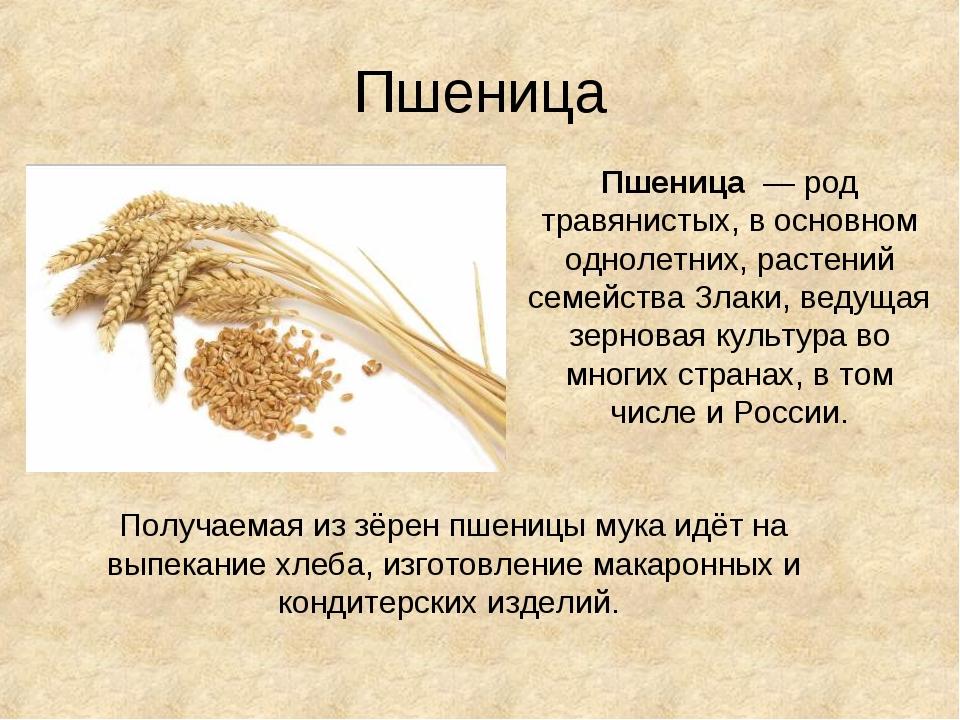Пшеница Пшеница — род травянистых, в основном однолетних, растений семейства...