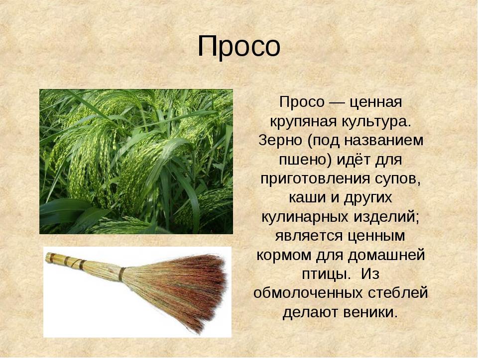 Просо Просо— ценная крупяная культура. Зерно (под названием пшено) идёт для...