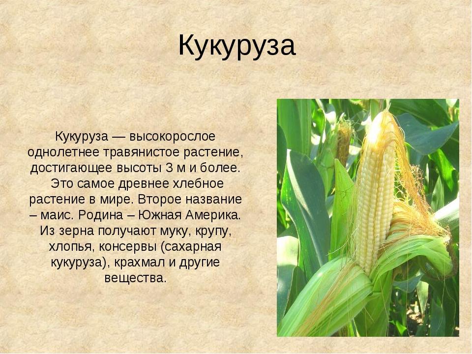 Кукуруза Кукуруза— высокорослое однолетнее травянистоерастение, достигающее...