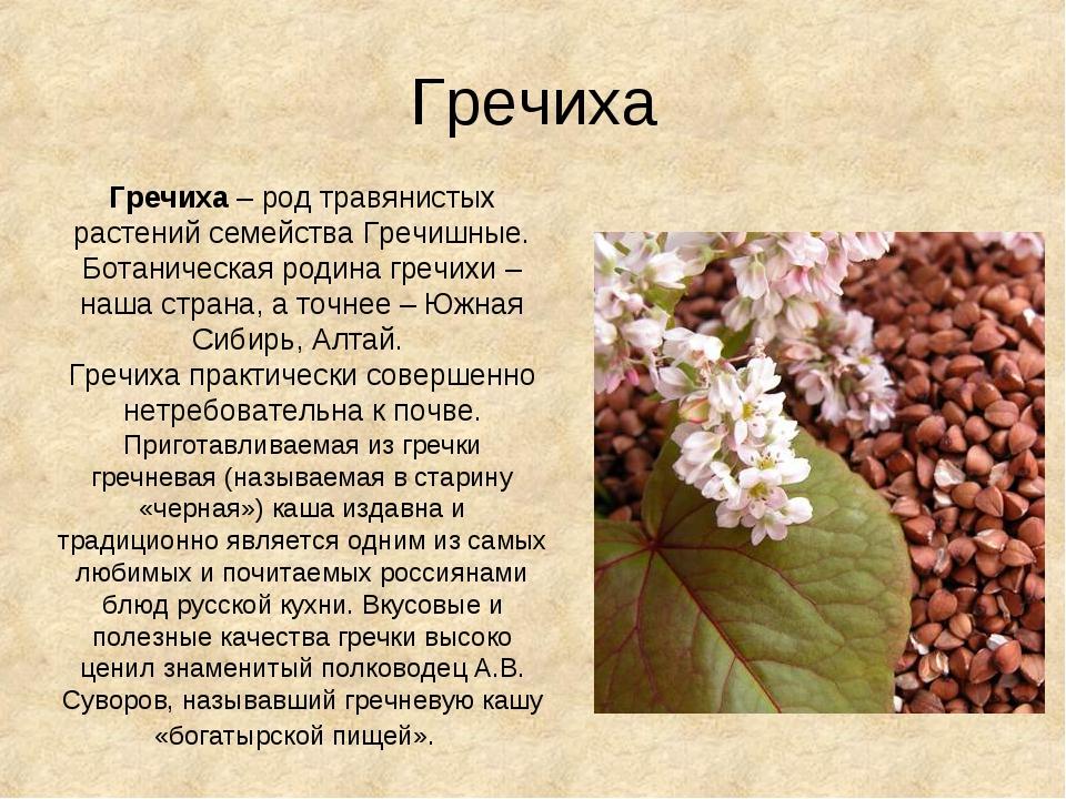 Гречиха Гречиха – род травянистых растений семейства Гречишные. Ботаническая...