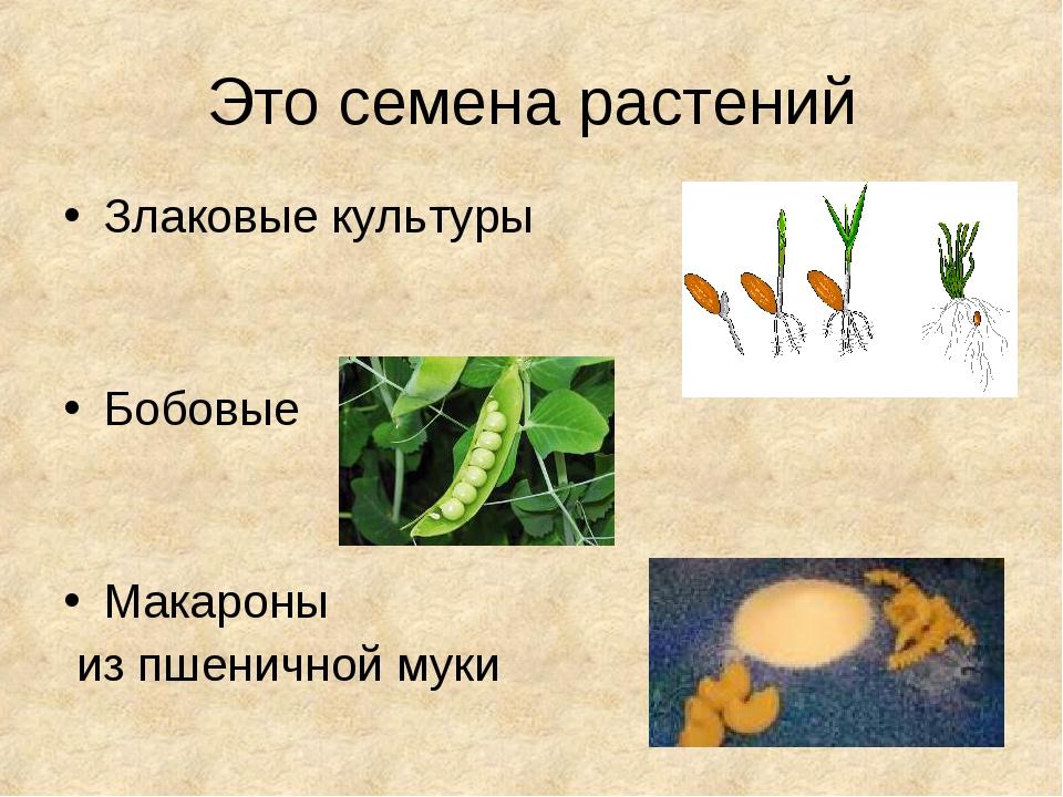 Это семена растений Злаковые культуры Бобовые Макароны из пшеничной муки