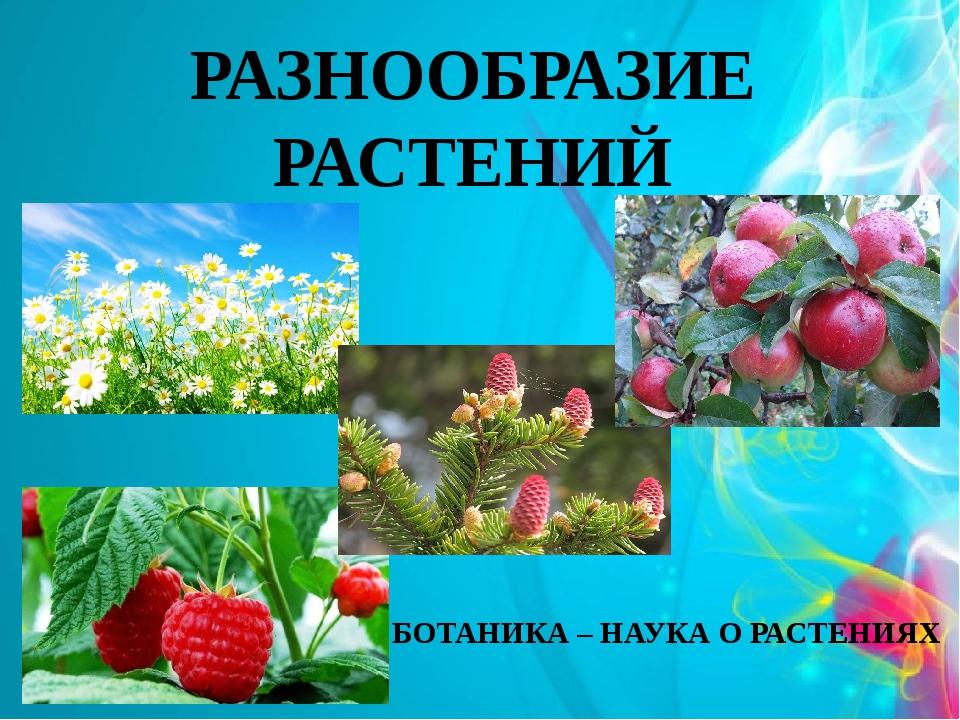 Утро девушками, картинки о растениях 3 класс