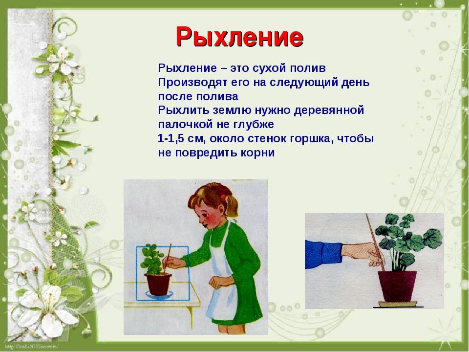 Картинки по уходу за комнатными цветами для детей