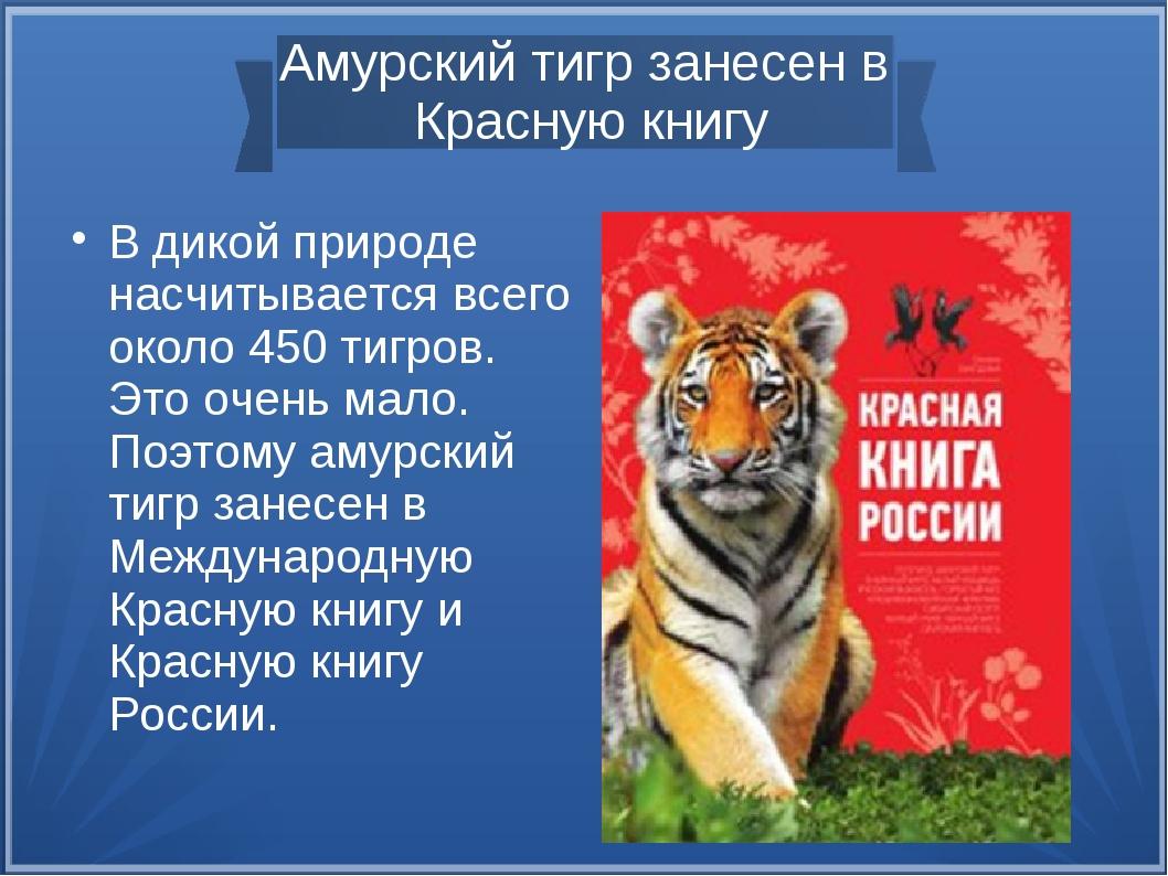 Тигры из красной книги россии фото и названия