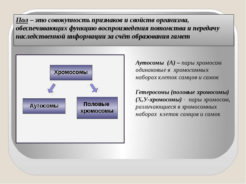 Пол – это совокупность признаков и свойств организма, обеспечивающих функцию...